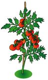 белизна томата bush предпосылки иллюстрация штока