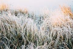 Белизна травы в заморозке стоковое изображение rf