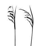 белизна травы предпосылки иллюстрация вектора
