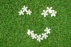 белизна травы цветка Стоковая Фотография RF