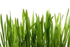 белизна травы Стоковое Фото