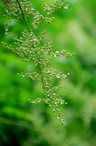 белизна цветения стоковое изображение rf