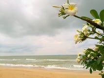 белизна цветка Волна океана на afte песчаного пляжа и захода солнца светлом Стоковые Изображения
