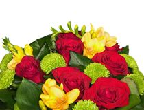 белизна цветка пука предпосылки Стоковое Фото
