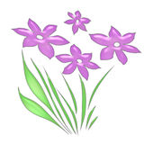 белизна цветков розовая Стоковая Фотография