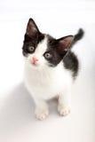 белизна черного взгляда котенка малая поднимающая вверх Стоковое фото RF