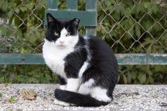 белизна черного кота Стоковое Фото