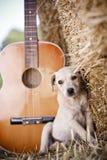 белизна щенка Стоковое Изображение