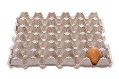 белизна яичка коробки Стоковые Изображения RF