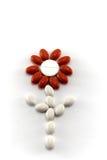 белизна 2 цветков красная Стоковые Изображения RF