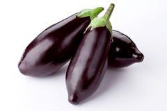 белизна aubergine свежая Стоковая Фотография