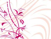белизна backgro флористическая розовая Стоковая Фотография