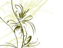 белизна backgrou флористическая зеленая Стоковые Фотографии RF