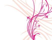 белизна bakgrou флористическая розовая Стоковые Фото