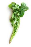 белизна cilantro изолированная кориандром Стоковое фото RF