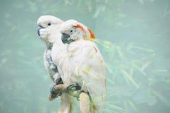 белизна cockatoo стоковое фото