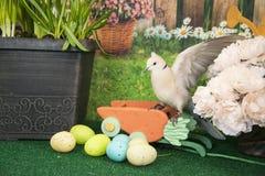 Белизна collared посадка голубя среди покрашенных пасхальных яя и цветков весны Стоковое фото RF