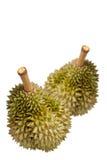 белизна durian предпосылки Стоковая Фотография
