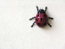 белизна ladybug предпосылки Стоковые Изображения
