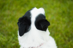 белизна mutt черной собаки Стоковые Изображения RF
