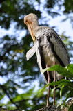 белизна naped краном Стоковая Фотография RF