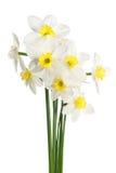белизна narcissus букета Стоковые Изображения RF