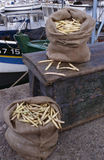 белизна paimpol haricot фасолей Стоковое Изображение RF