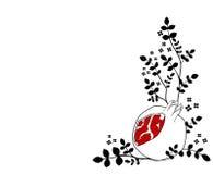 белизна pomegranate Стоковое Изображение
