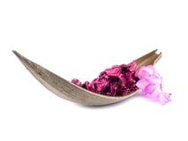 белизна potpourri пинка цветка кактуса Стоковое фото RF