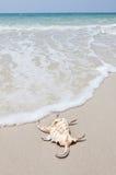 белизна seashell песка пляжа Стоковая Фотография RF
