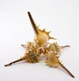 белизна seashell предпосылки Стоковое Фото