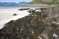белизна seaweed пляжа песочная Стоковые Изображения RF