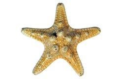 белизна starfish предпосылки стоковое фото
