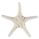 белизна starfish Стоковое Изображение