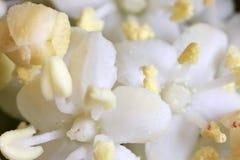 белизна supermacro цветка Стоковые Фотографии RF