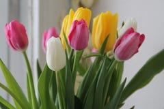 Белизна Tulps весны розовая желтая Стоковые Фотографии RF