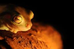 белизны вала лягушки Стоковые Фото
