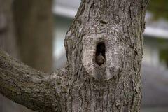 Белка в дереве стоковые фото