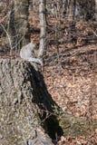 Белка в центральном парке стоковое изображение