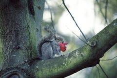 Белка на ветви дерева стоковое изображение rf