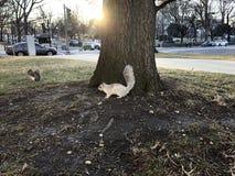 Белка на дереве в парке стоковая фотография rf