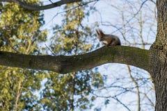 Белка на дереве на солнечный день стоковые фото