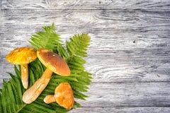 белка пущи s хлеба подосиновика edulis Стоковое Изображение RF