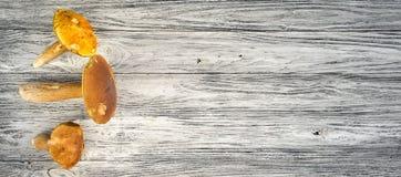 белка пущи s хлеба подосиновика edulis Стоковые Изображения