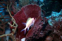 белка рыб Стоковое Изображение