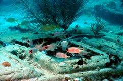 белка рыб Стоковое фото RF