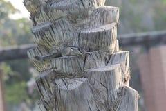 Белка сидя на дереве финиковой пальмы Стоковые Изображения RF