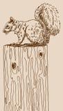белка Стоковые Изображения