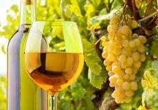 Белое вино и виноградины Стоковое Фото