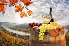 Белое вино с бочонком на винограднике в Wachau, шпице, Австрии стоковые изображения